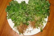 Healing, Health and Wellness - Herbs and Medicinal Plants