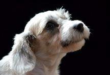 Dogs Back in black / Fotografías de estudio a perritos por Arte Animal