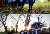 Animali fantasy