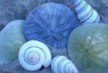 Sea Shells / by Melissa Fick