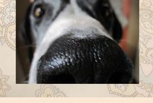 FibroDog | Fibromyalgia and chronic myofascial pain support dog / A collection of FibroDog posts, pics, and interviews. And lots of snouts.