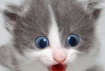 Mila Ribbens / # kitty's are so cute what do you think