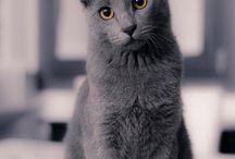 Gatti.. la mia passione