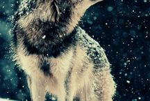My Wolf, my Darkness, my Sin / Beyond expectations there is a wolf, which came suddenly and fulfill a just created universe.