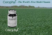 History of Wheat Grass