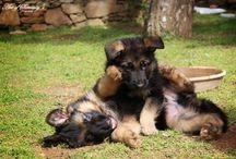 Cães maravilhosos!!!