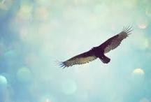 Soaring Birds / kindred spirits