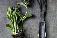 Gardening / Jardiner / Urbain gardening with style - Jardinage urbain stylé