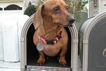 Doxies / by Sarah Ware