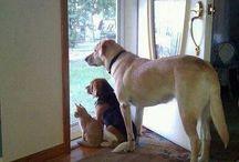 Faithful Companions Await Our Return / Also goes by the name, Neighborhood Watch Patrol.