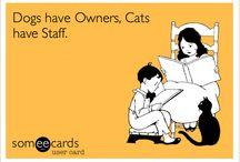 Cats! / by Jenna Kirby