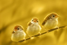 All God's Critters - Birds-Yellow/Orange/Red / by Kay Hough