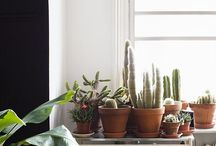 Interior-plants