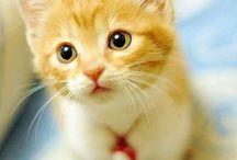 Ginger kitties