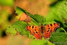 Butterflies / I admire them. Their lightness in the breeze. Moje sbírka motýlů:)