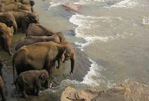 For The Love Of Elephants / by Mari Carmen Bondi Murray