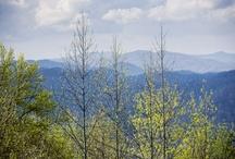 Blue Ridge/Smokies/Appalachians / by Debbie Jenkins