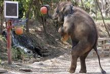 Basketball Zoo