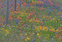 Terralpha s'inspire.... Végétaux / Des couleurs, des textures, des contrastes