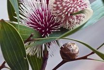 különleges növény