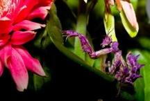 Pájaros e insectos / by TuJardínOnLine - Diseño de jardines de bajo mantenimiento