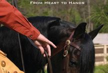 Horse Training / by Michelle Nathan