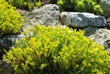 Nasz ogród i rośliny / Widoki naszego ogrodu