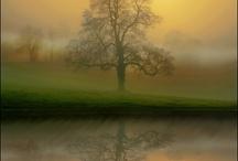 World of Beauty / by Susan Swink