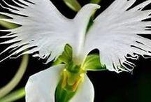 plants favoutites