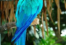 Birds / Parrots