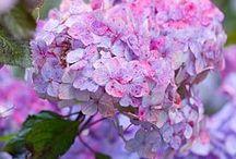 purple    perpl       fialová