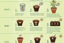 food that regrow
