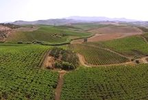 Agriturismo Tarantola Drone