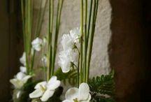flores - plantas