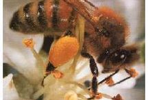 Honey for Health & Fitness / None of the information provided here is intended to replace sound medical advice, nor is it recommended for people to stop their prescribed medications.  Seek medical advice if symptoms persist or arise. Our intention is to inform people of findings about the potential health-giving benefits of honey & other honeybee related products. We do not confirm any of this information to be true. Always consult with your physician before using any products or changing your exercise routine.