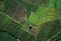 it IS easy being green / The beauty of the color that is green.