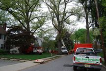 Morristown New Jersey Tree Services Companies