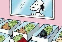 tudo de cachorro