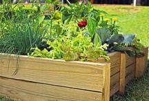 Raised beds / Garden