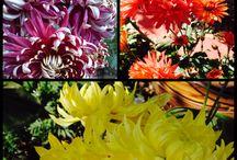 floral... / flowers in my garden....