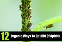 Organic Gardening Tips & Ideas