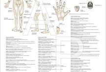 Acupunctures points
