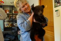 Our bears storyboard / Florence who travels the world to help save and rescue a variety of wild and domestic animals