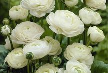 White Flowers / A selection of white flowers we love to use.