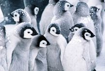 Penquins / by Nancy Gallagher