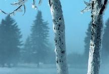 Winter on the Range