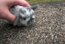 Bunnys