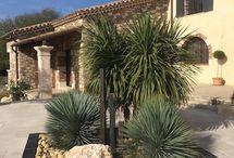 Jardin Massif plantes exotiques
