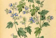 Blomsterbilleder