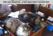 CATS IN BOXES / by Jill Blunden